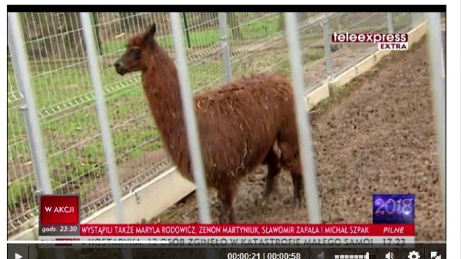 Mini zoo w Zochcinku w Teleexpresie